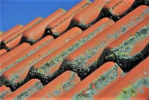 Roof Restoration Brisbane Services